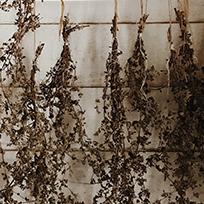 Plantes aromatiques, herbes médicinales, fleurs