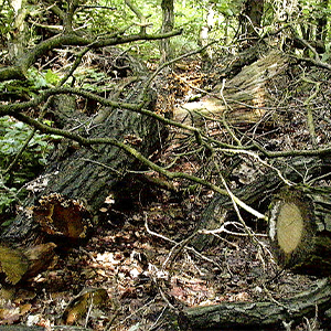 Rémanents forestiers
