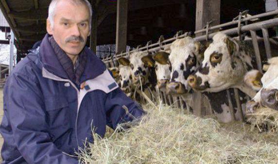 M. Angot donnant du foin à ses vaches