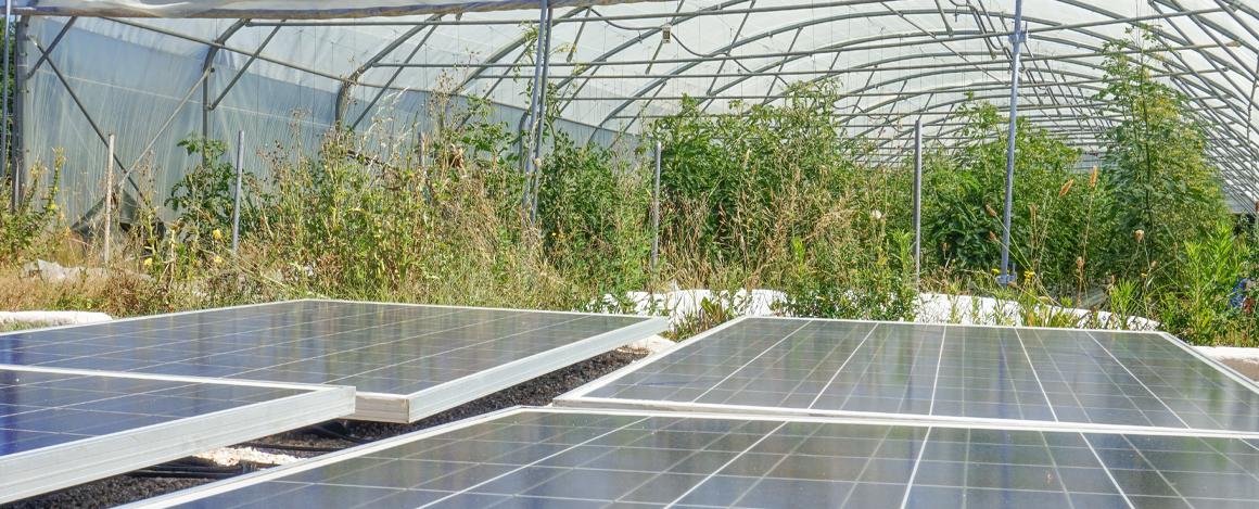 panneaux solaires pour alimentation pompe agricole