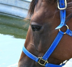 Système abreuvement chevaux
