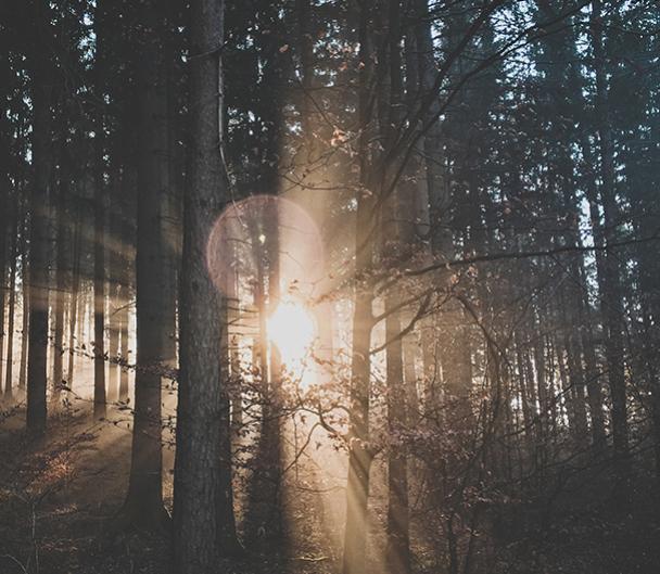 Photo d'un bois avec les rayons du soleil