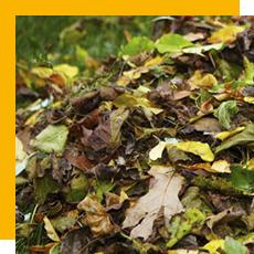 feuilles et déchets verts sur le sol